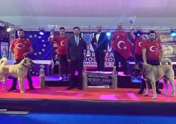 Türk Çoban Köpeği KANGAL Dünya Şampiyonu  AVKIF