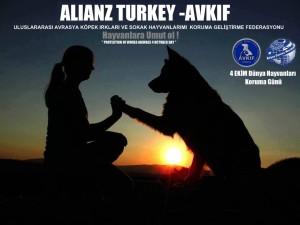 avkif-alianz-turkey-4-ekim