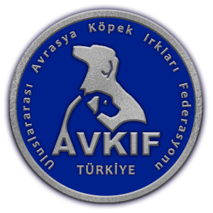 avkif-logo-gumus-2