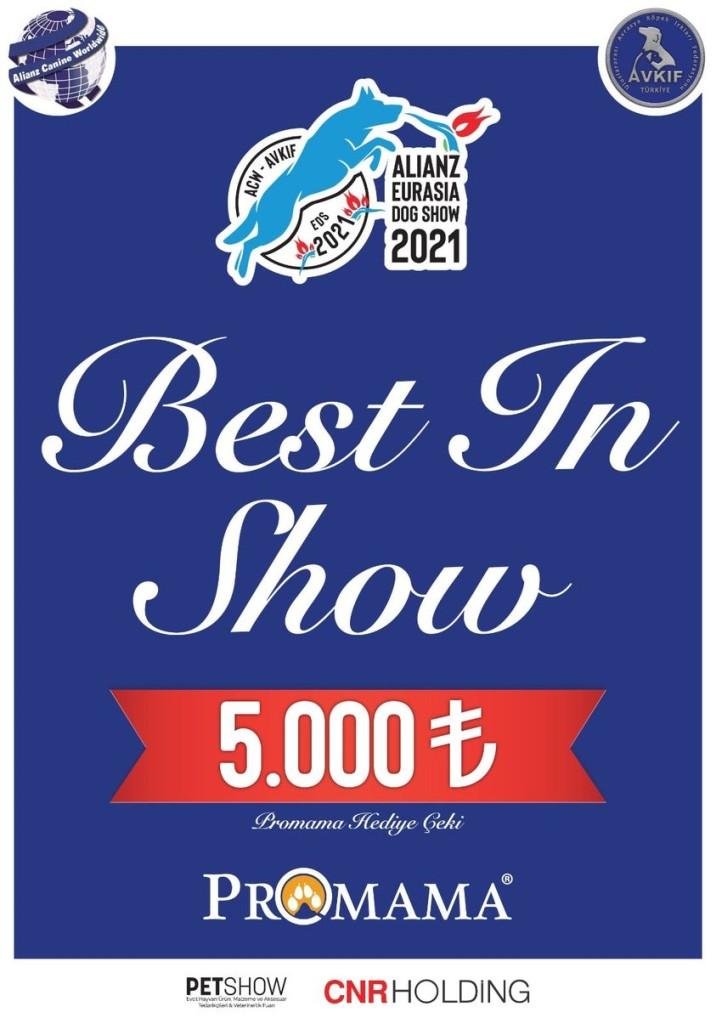 bestin-show-1