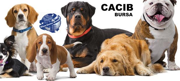 CACIB2