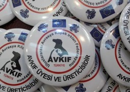 Türkiye'nin Resmi Köpek Irk Federasyonu ( AVKIF TURKEY OFFICIAL CYNOLOGY FEDERATION )