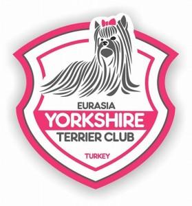 yorkshire-terriar