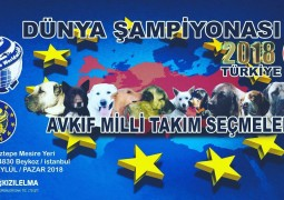 ACW WORLD DOG SHOW 2018 TURKEY