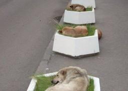 Sokak Köpekleri