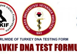 AVKIF-DNA ANALİZ İSTEM FORMU