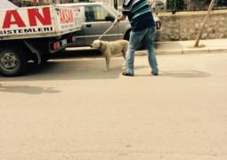 Ekiplerce Sokak Köpekleri Toplama Çalışması